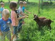 Op de kinderboerderij van Het Netepaleis!